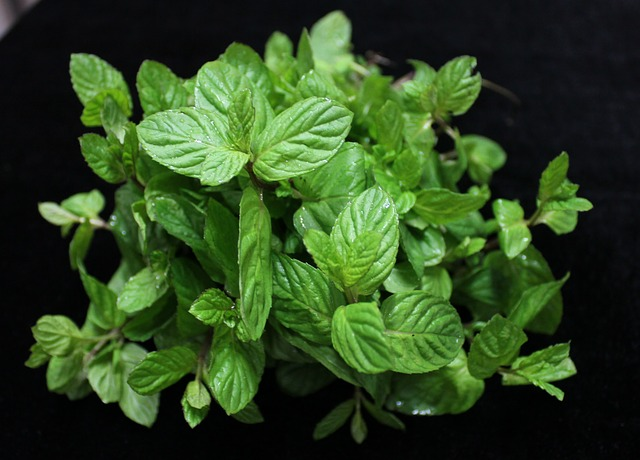 Food Waste Mint